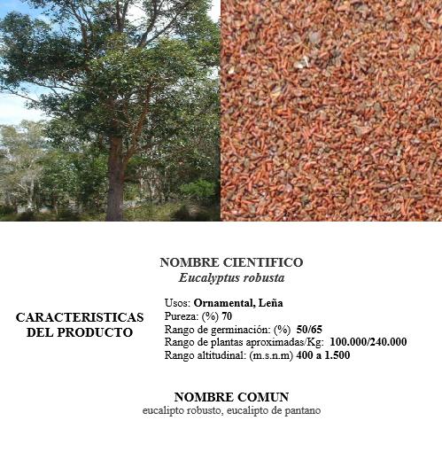 eucalipto robusta
