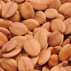 acacia_rosada